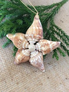 Sea Shell Star Ornament/Coastal by ShoreDecorandMore on Etsy