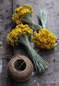 Lavender Flowers, Dried Flowers, Herb Garden, Garden Plants, Plants Indoor, Helichrysum Italicum, Herbs Image, Nothing But Flowers, Cemetery Decorations