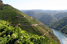 #Vinedos en la #RibeiraSacra, #Galicia