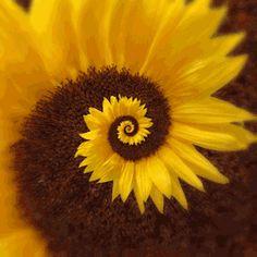 gif trippy psychedelic flower sun infinite vortex endless petals sunflower Spiral loop hypnotic pollination