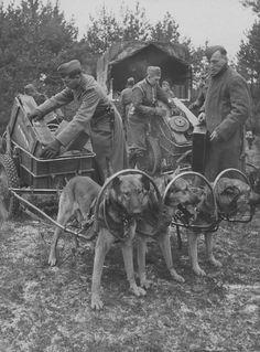 """1943 . 6`th Waffen SS Gebirgs Div """" Nord """""""
