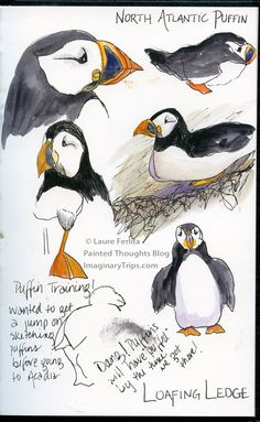 Puffin Practice. Nature, journal, sketchbook, notebook, dairy, words and images, drawing.