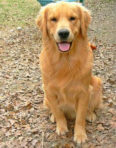 Handsome golden boy