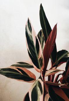 00 Yes, They're Real: 7 Stunning House Plants That Are Actually Pink Ja, sie sind echt: 7 atemberaubende Zimmerpflanzen, die tatsächlich rosa sind House Plants Decor, Plant Decor, Flower Pot Design, Best Indoor Plants, Indoor House Plants, Tropical House Plants, Indoor Herbs, Air Plants, Cactus Plants