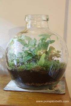 A traditional glass terrarium is a lovely feature to enjoy at home, especially over the winter months.  Find out all about terrariums at www.pumpkinbeth,com