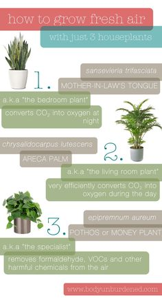 Indoor air can be up to more polluted than outdoor air. Grow your own fresh air with these natural purifiers - houseplants! Health and home. I like to grow herbs so I can cook with them. Living Room Plants, Bedroom Plants, Garden Plants, Indoor Plants, Air Plants, House Plants Air Purifying, Vegetable Garden, Mother In Law Tongue, Indoor Air Quality