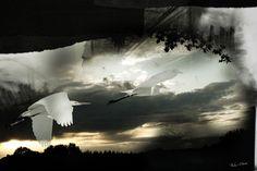 Witte reigers  Fieke werkt met een combinatie van fotografie en illustratie. Ze combineert materialen zoals pastelkrijt, verf en houtskool met fotografie. Daarna fotografeert ze het beeld. De combinatie van deze technieken zorgt voor een zekere gelaagdheid waar Fieke in haar werk voortdurend naar op zoek is. Letterlijk door de opbouw in lagen als in collages, maar ook figuurlijk in haar streven naar diepgang.