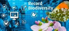 Home - Biodiversity Ireland Service Level Agreement, Citizen Science, Ireland, Web Design, Neon Signs, Irish, Site Design