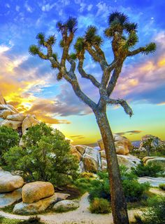 Night Sky and Astro-Photography is always amazing in the park! Sunsets in the park! Check out our B&B Workshops in Joshua Tree. Learn Astro, Landscape & Timelapse Photography in the Park! See you under the Stars!