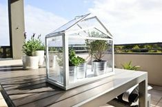 It's no secret we're obsessed with Wardian cases and other tabletop conservatories. So is our friend Maria Latinen of Scandi Home, who planted an indoor garden in her miniature greenhouse: Greenhouse Kitchen, Miniature Greenhouse, Simple Greenhouse, Outdoor Greenhouse, Cheap Greenhouse, Mini Greenhouse, Greenhouse Plans, Greenhouse Gardening, Indoor Gardening