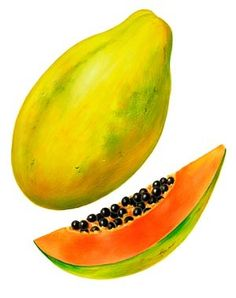 Papayas: Papayas are another food high in vitamin C, with one serving holding 100% of your daily needs. Try throwing some in your next smoothie or yogurt. This bright fruit it also high in vitamin A.