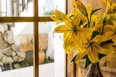 Yellow Flowers — PixaSquare | Free Hi-Res Stock Photos