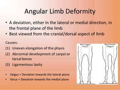 Image result for angular limb deformity horse
