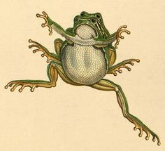 Frog coupling by peacay, via Flickr