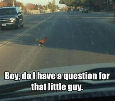 Boy, do i have a question for that little guy.... Why are you crossing the road!?!?!? Has he learned NOTHING?