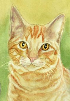 Orange Tabby Cat Art Print Matted or Unmatted Cat by PTarlowArt, $14.00