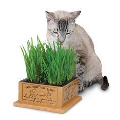 SmartCat Organic Kitty's Garden