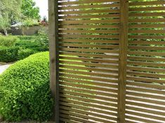 The best climbing plants for fencing | Jacksons Fencing