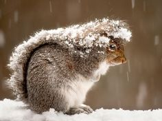 Brrrr. How cold must it be that a squirrel has to use his own tail as a coat?