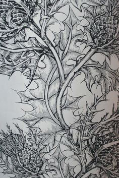 Drawing Unique Timorous Beasties Wallcoverings - Thistle perfect for entrance hall - Thistle Wallpaper, Wall Wallpaper, Thistle Tattoo, Lino Art, Timorous Beasties, Woodland Christmas, 3d Drawings, Colour Schemes, Printmaking