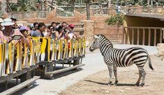 Rio Safari Elche, Elche: See 240 reviews, articles, and 146 photos of Rio Safari Elche, ranked No.6 on TripAdvisor among 56 attractions in Elche.