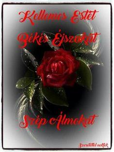 Christmas Wreaths, Album, Humor, Holiday Decor, Humour, Funny Photos, Funny Humor, Comedy, Lifting Humor