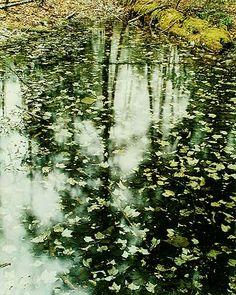 Eliot Porter - Wood Pool with Leaves on Bottom, Chocorua, New Hampshire, May 7, 1961