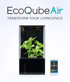 EcoQube Air - The World's First Desktop Greenhouse | THE UT.LAB | Green Kickstarter Projects *