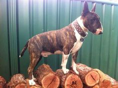 King of the log pile