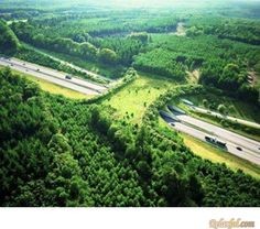 A wildlife bridge to help animals cross the highway� http://www.adairepalmer.com.au