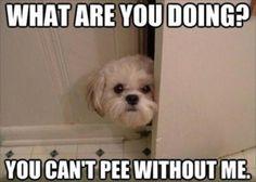 Dump A Day dog in bathroom, funny - Dump A Day