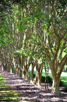 I uploaded new artwork to fineartamerica.com! - 'Norfolk Botanical Garden 5' - http://fineartamerica.com/featured/norfolk-botanical-garden-5-lanjee-chee.html