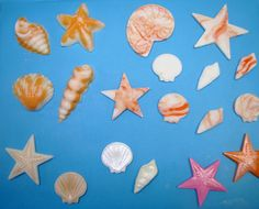 Nothing says summer like the beach, but a beach cake with just sand and water can be boring. Dress up your cake with seashells and palm trees!