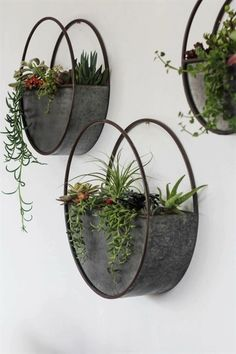 beautiful hanging plants ideas for home decor - Page 38 .- beautiful hanging plants ideas for home decor – Page 38 of 42 – SooPush hanging plants, indoor plants, outdoor plants - Plant Wall Decor, House Plants Decor, Wall Of Plants Indoor, Hang Plants On Wall, Hanging Plant Wall, Sun Plants, Tomato Plants, Hanging Baskets, Potted Plants