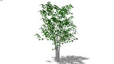 Model of Summer birch deciduous tree high polygon Landscape Trailers, 3d Tree, Lawn Equipment, 3d Warehouse, Deciduous Trees, Hand Tools, Landscape Architecture, Home Depot, Birch
