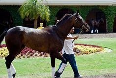 race horses | thoroughbred racing horse | Flickr - Photo Sharing!