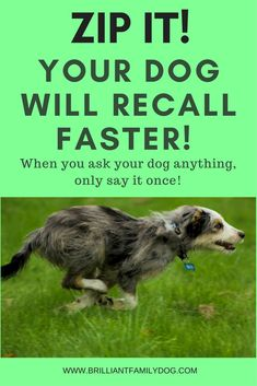 The more you yap at your dog, the less he will listen! Nobody likes being nagged. Get your free guide 9 Rules for a Perfect Recall via @KaufmannsPuppy