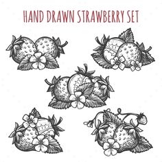 Hand drawn strawberry vector illustration. Fruit dessert drawing sketch