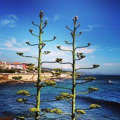 Alghero in Sardegna