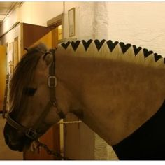 Happy Valentine's Day! Look what you can do -- clip hearts in a Fjord horse's mane <3