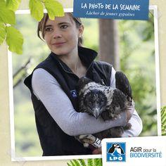 Juin 2013: lâcher de deux Gypaètes, Dourbie et Layrou, sur le Causse noir en Aveyron. Un nouvel espoir pour cet oiseau emblématique et une belle réussite pour l'un des programmes phares de la LPO. Voir la vidéo et les photos sur : http://www.lpo.fr/actualité/une-vidéo-et-des-photos-des-deux-jeunes-gypaètes-barbus-relâchés-sur-le-causse-noir    Recevez directement la photo de la semaine chez vous, par courriel, en vous inscrivant à la newsletter LPO : http://newsletter.lpo.fr/?p=subscribe