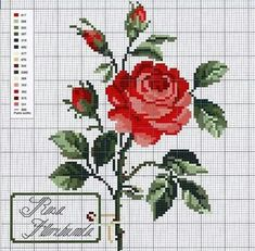 Rosa vermelha