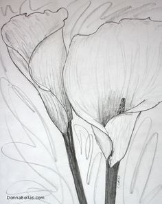 Two Calla #Lilies #Drawing #Sketch of two calla #lily #flowers touching. #Art rendered in pencil. #CallaLilies #CallaLily