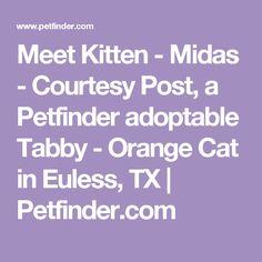 Meet Kitten - Midas - Courtesy Post, a Petfinder adoptable Tabby - Orange Cat in Euless, TX | Petfinder.com