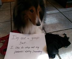 Dog Shame | I'm not a gossip, but…I like to whip out my...