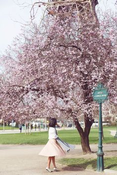 Paris cherry blossom