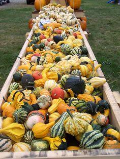 Hawk Valley Garden..Bunk full of gourds