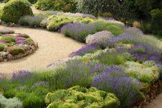Lavendel Garden from Roger Bastin in the Netherlands