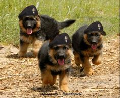 starting young k9 by black beret. nice!