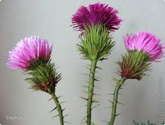 He thistle thorns, chertogon, thistle spiny, thistle, burdock thorny, etc. There are about 120 species of thistle:.. It's thistle spiny, sea, curled, drooping, melkogolovchaty, artichoke (giant), dairy (milk thistle) and et al. photo 29